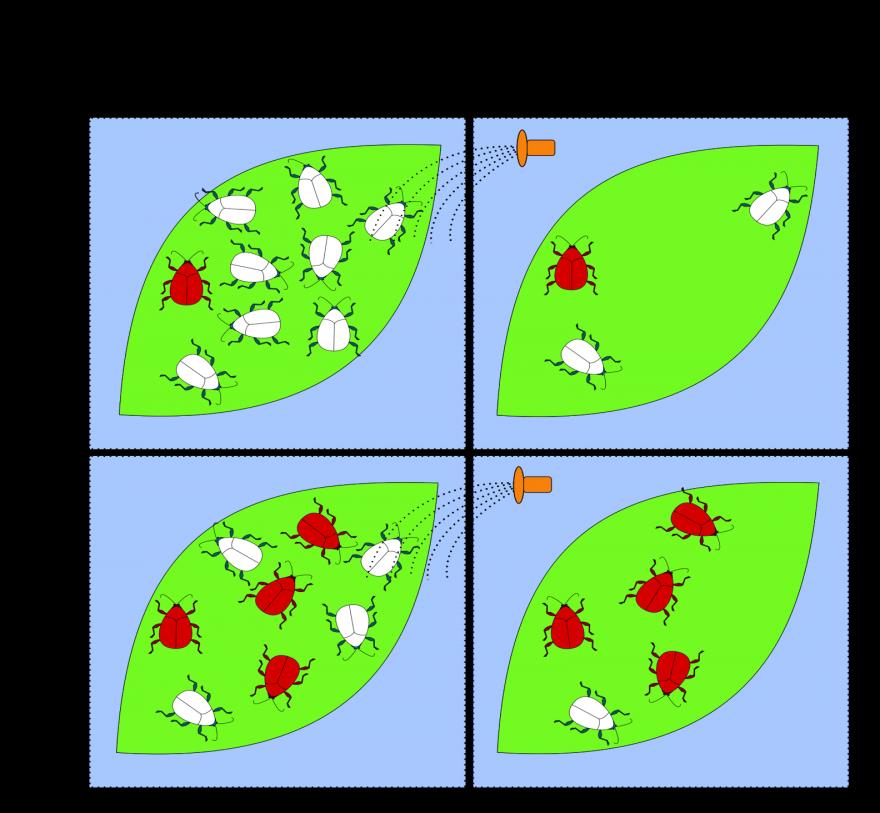 Pesticide resistance in a pest population